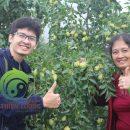 Hồng táo hữu cơ