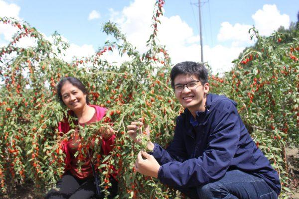 Thăm vườn Kỷ Tử Organic cùng Sư phụ mẹ