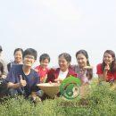 Vườn Cúc Hoa Hữu Cơ tại trang trại Đại Ngàn