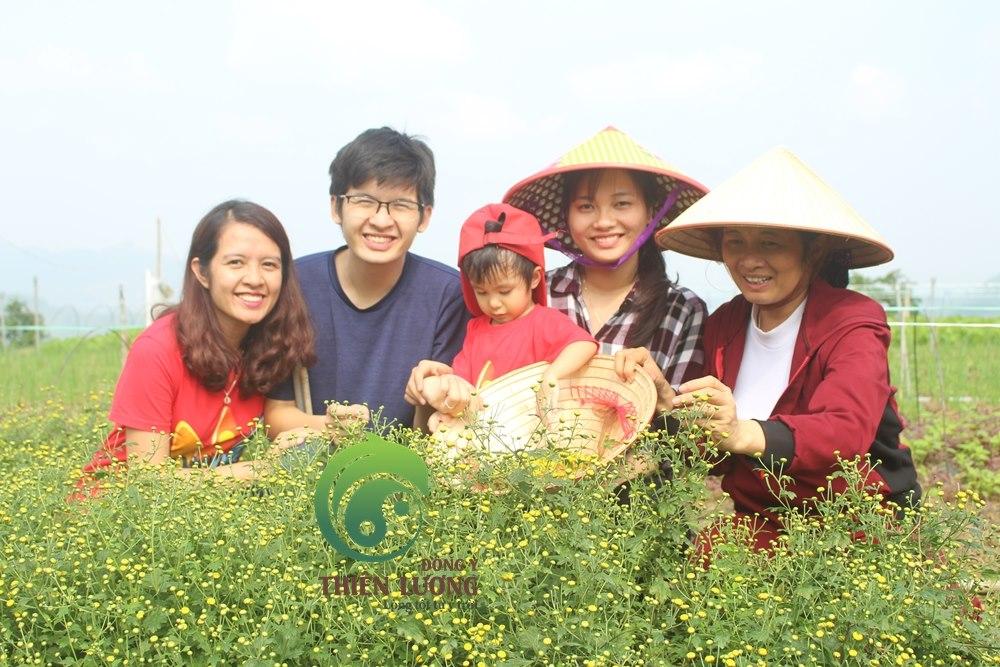 Đông Y Thiên Lương đến thăm và thu hoạch Cúc hoa hữu cơ tại Trang trại hữu cơ Hoa viên