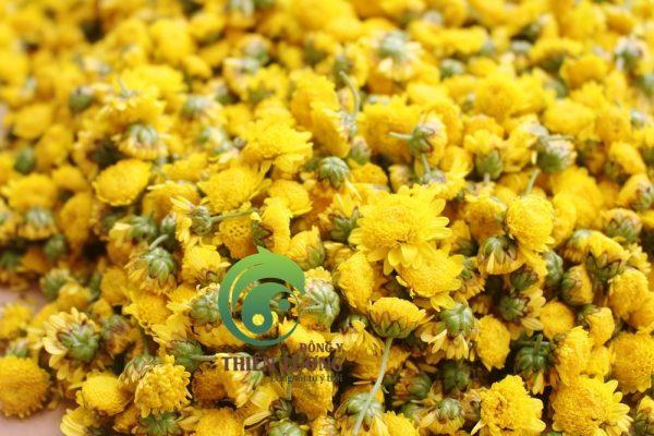 Cúc hoa hữu cơ tươi khi vừa mới thu hoạch.