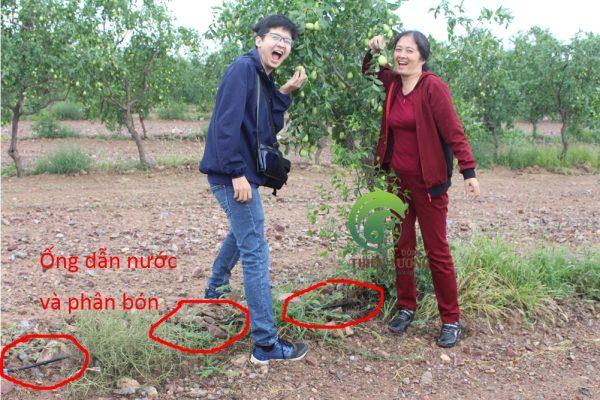 Hình ảnh hệ thống tưới nhỏ giọt đến từng gốc táo.