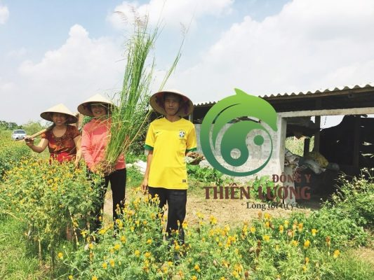 Lương Y Đinh Thị Song Nga cùng với chú Nguyễn Phóng ( chủ Nông trại HappyFarm).