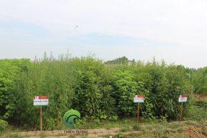 Vườn dược liệu hữu cơ Đông Y Thiên Lương
