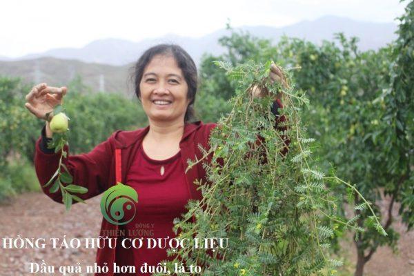 Hồng táo hữu cơ dược liệu và Bạch tật lê hữu cơ được tình cờ tìm thấy ngay dưới gốc cây Hồng táo hữu cơ