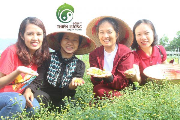 Đông Y Thiên Lương cùng cô Hoa chủ trang trại hữu cơ Hoa viên thu hoạch những bông Kim cúc đầu tiên.