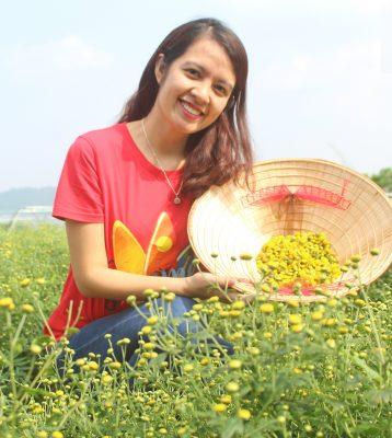 Đông Y Thiên Lương trong chuyến thu hoạch cúc hoa hữu cơ tại trang trại hữu cơ Đại Ngàn