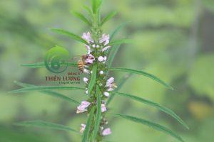 Công trùng an nhiên chung sống với dược liệu hữu cơ.