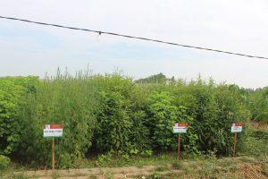 Dược liệu hữu cơ Đông Y Thiên Lương