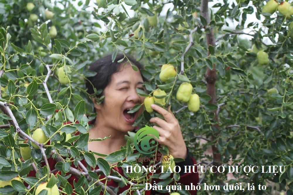 Lương Y Đinh Thị Song Nga tại vườn hồng táo hữu cơ.