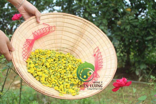 Trà hoa cúc hữu cơ Đông Y Thiên Lương