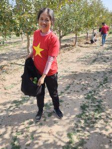Táo tươi hữu cơ Đông Y Thiên Lương