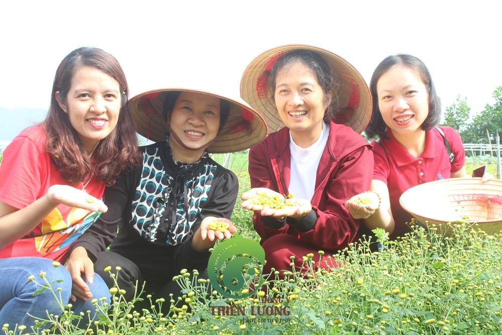 Đông Y Thiên Lương cùng cô Hoa - chủ trang trại Hoa Vien Modern Farm (thương hiệu Rau Hữu Cơ Đại Ngàn) trong buổi thu hoạch cúc hoa hữu cơ.