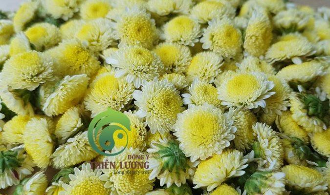 Cúc đinh hương hữu cơ - Sản phẩm tuyệt vời cho người cao huyết áp