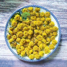 Cúc hoa hữu cơ Thiên Lương - một trong những nguyên liệu có tác dụng chống siêu vi gây cúm cực tốt.