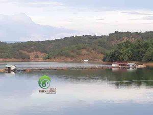 Hình ảnh hồ chứa nước tưới cho khu vực trồng điều hữu cơ.