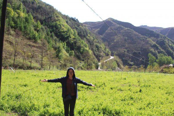 Lương y Đinh Thị Song Nga thăm vườn Hoàng kỳ hữu cơ (vị thuốc Đông y cực tốt cho bệnh giảm bạch cầu) tại vùng núi cao Cam Túc TQ.