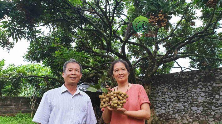 Ông và mẹ vui vẻ đàm về kỹ thuật trồng và chăm sóc cây nhãn.
