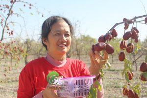 Dưỡng sinh – Nâng cao sức đề kháng cùng táo đỏ hữu cơ Đông y Thiên Lương